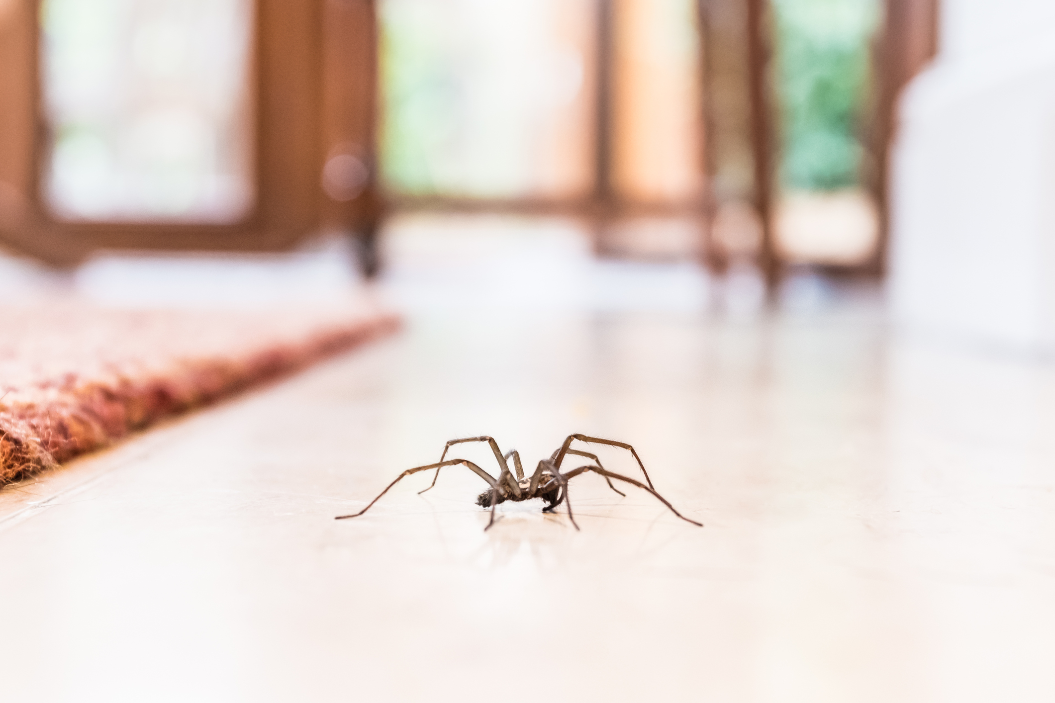 Some spider bites can really pack a punch. For serious infections, seek the help of the experts at the Methodist Wound Treatment Center.